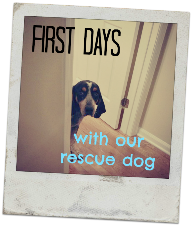 firstdayswithourrescuedog