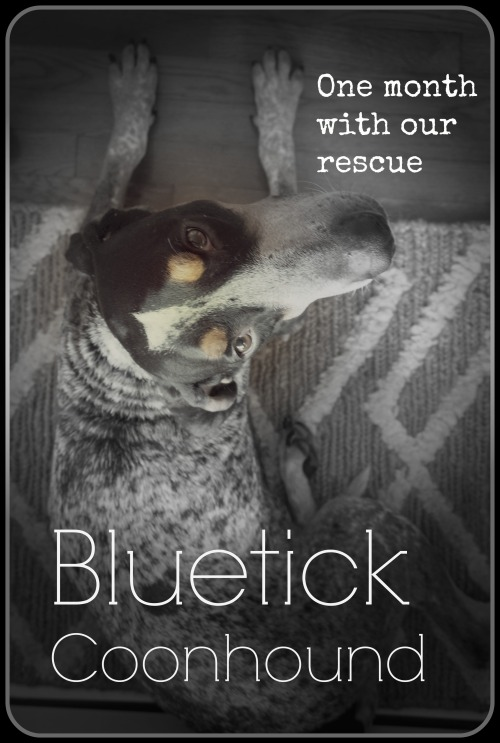one month with bluetick